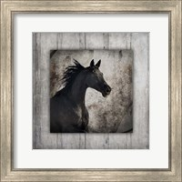 Gypsy Horse Collection V1 5 Fine Art Print
