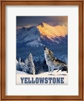 Yellowstone Wolf Fine Art Print