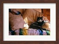 Tuxedo Cat Sitting On Sofa Fine Art Print