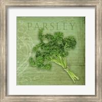 Classic Herbs Parsley Fine Art Print