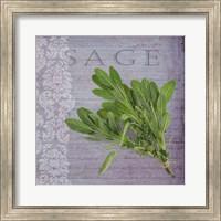Classic Herbs Sage Fine Art Print