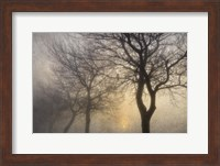 Mystic Trees with Owl Fine Art Print