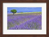 Lavender Fields with Tree Fine Art Print