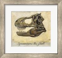 Tyrannosaurus Rex Skull Fine Art Print