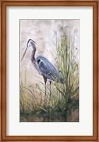 In The Reeds - Blue Heron - B Fine Art Print
