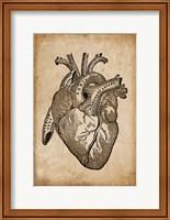Anatomy 8 Fine Art Print