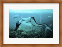 Sleeping Mermaid Fine Art Print