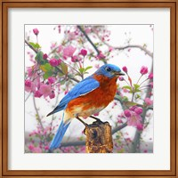 Spring Bird 6NV Fine Art Print