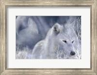 White Wolf Fine Art Print