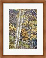 Color of Autumn Fine Art Print