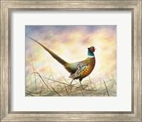 Spring Rooster Fine Art Print