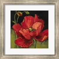 Poppy Blossom I Fine Art Print