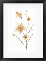Morning Glory II Fine Art Print