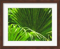 Painted Ferns II Fine Art Print
