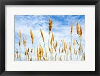 Wheat Blowing in the Wind Fine Art Print
