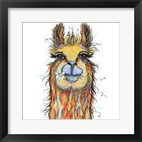 Llama with Daisy Fine Art Print