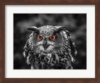 Red Eyed Owl - Black & White Fine Art Print