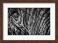 Elephant Close Up - Black & White Fine Art Print