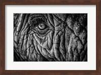 Elephant Close Up II - Black & White Fine Art Print