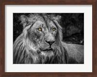 The Lion - Black & White Fine Art Print