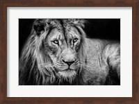 The Lion II - Black & White Fine Art Print