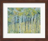 Birch Forest Fine Art Print