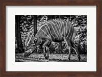 The Deer - Black & White Fine Art Print