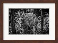 The Deer II - Black & White Fine Art Print