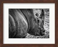 Rhino - Black & White Fine Art Print