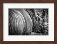 Rhino II - Black & White Fine Art Print