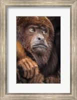 Oranje Monkey II Fine Art Print