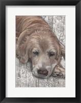 Lucky Dog Golden Fine Art Print