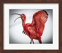 Red Bird IIII Fine Art Print