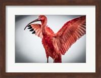 Red Bird V Fine Art Print