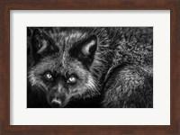 Silver Fox II Black & White Fine Art Print