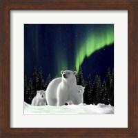 Polar Family 2 Fine Art Print
