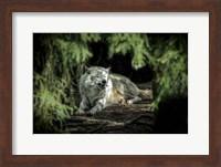 The Howling Wolf Fine Art Print