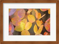 Fall Leaves 2 Fine Art Print