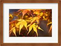 Fall Leaves 7 Fine Art Print