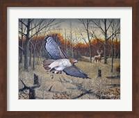 Red-Tailed Hawk Fine Art Print