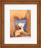 Polar Bear Cub Fine Art Print