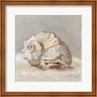 Impressionist Shell Study II Fine Art Print