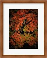 Fall Colours 1 Fine Art Print