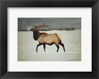 Silver Mist Elk Fine Art Print