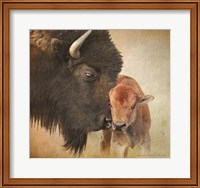 Bison Mother And Calf Fine Art Print