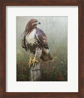 Hawk And Barbed Wire Fine Art Print
