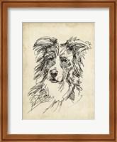 Breed Studies V Fine Art Print
