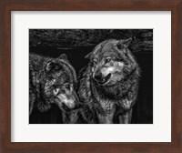Wolfpack Black & White Fine Art Print