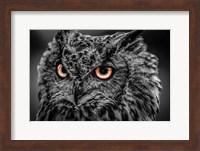 Wise Owl 5 Black & White Fine Art Print
