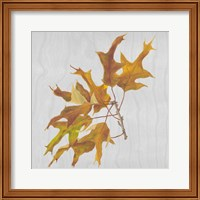 Autumn Leaves III Fine Art Print